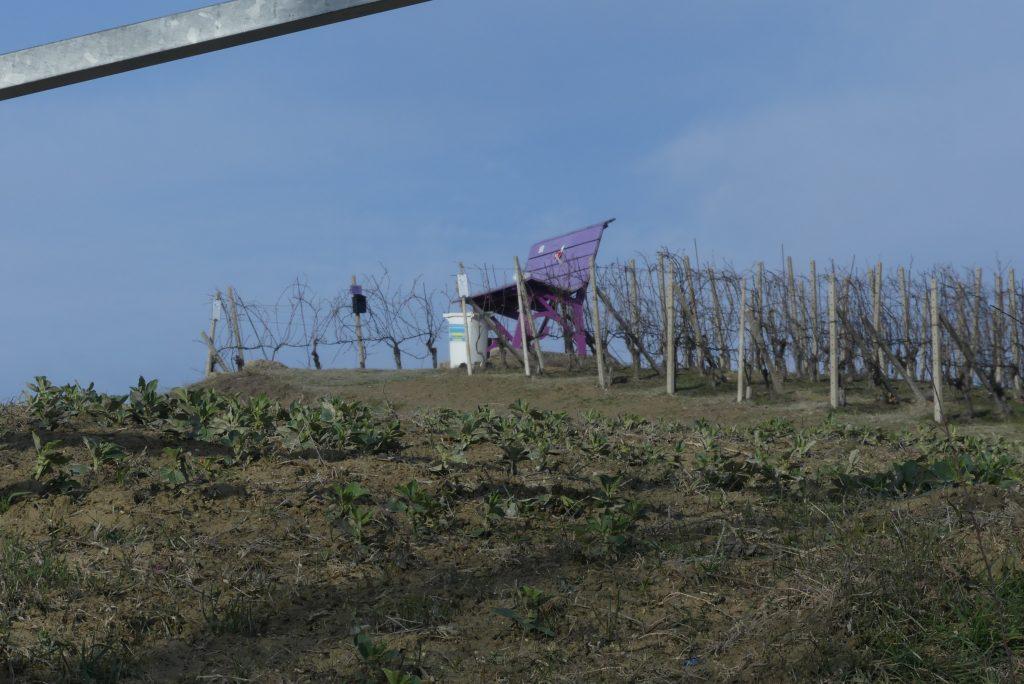 panchina viola farigliano